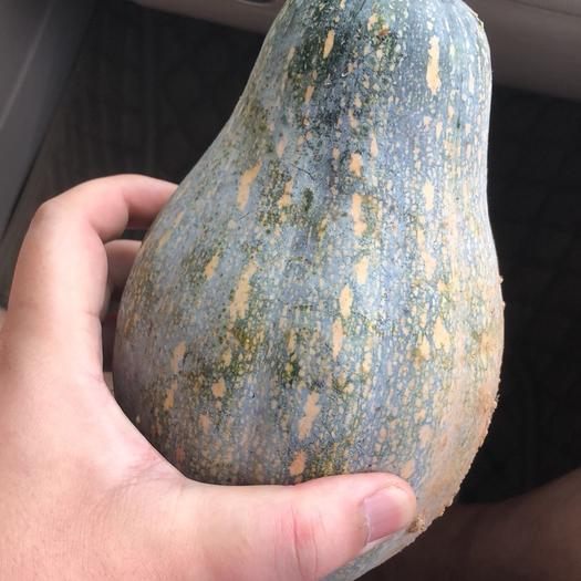 锦州香芋南瓜 2~4斤