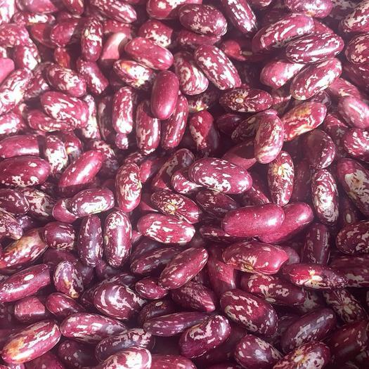 呼倫貝爾鄂倫春自治旗紅蕓豆 2019年紫花 大量 要的聯系