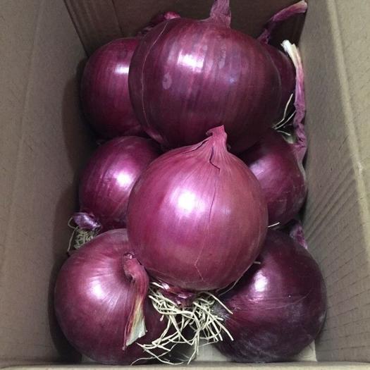 济宁金乡县 【2019新鲜】现挖紫皮洋葱农家自种新鲜蔬菜 特价包邮