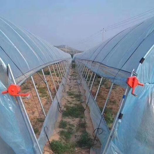 天津种植大棚 天津大棚管厂家 ,种植棚 养殖棚 等质量保证