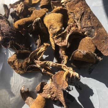 产地吨位直批松蘑烤干(初级统,一级统货)
