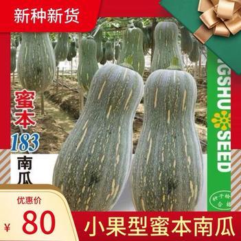 密本南瓜种子183早熟南瓜小果秘本高产好吃粉甜南瓜种籽基地种