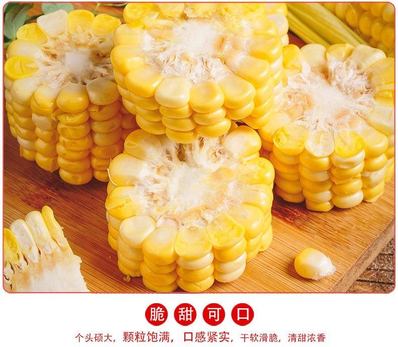 云南水果玉米 脆 甜 多汁爆浆 生熟可吃 大量供货 专业一件