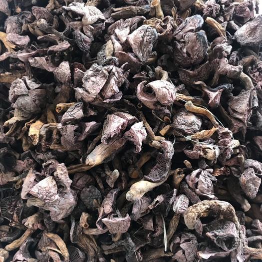 内蒙古自治区赤峰市红山区松蘑 东北红蘑 肉蘑