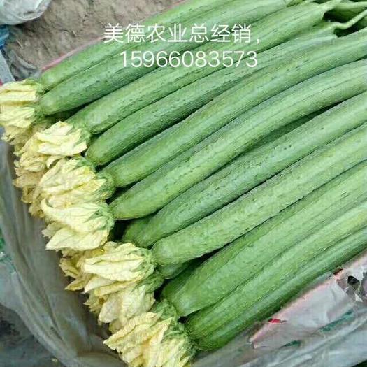 山东省潍坊市寿光市肉丝瓜 混装通货