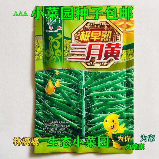 宿迁沭阳县紫油菜种子 极早熟三月黄种子油菜籽种子包邮