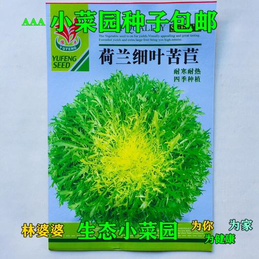 沭阳县 荷兰细叶苦苣种子包邮