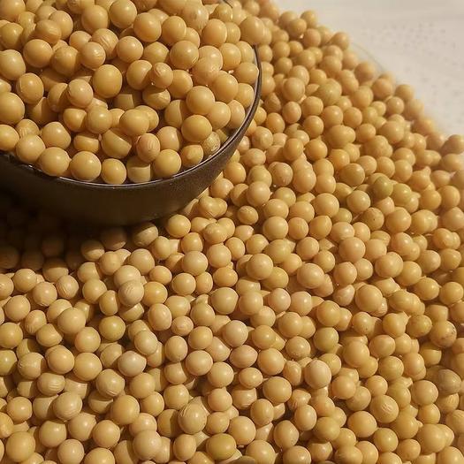 黑河五大连池市 新黄豆 东北非转基因自家黄豆 黑龙江大豆 生豆芽打