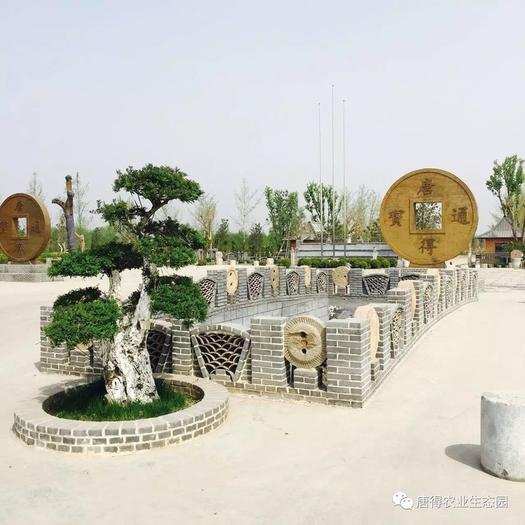 山东省济南市章丘区 济南600亩苗圃出售