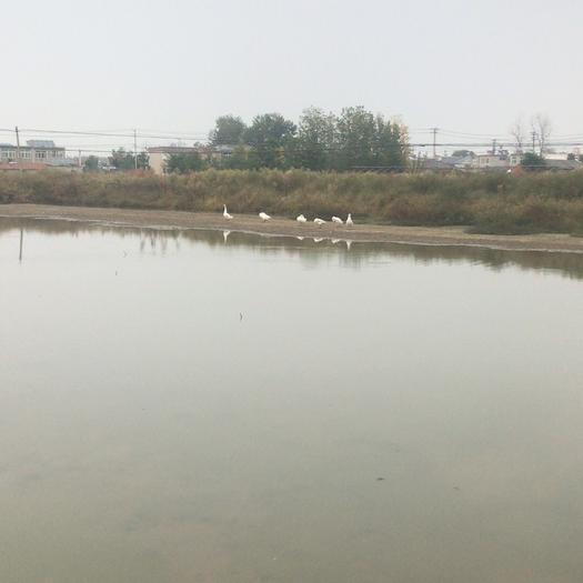 安徽省合肥市长丰县水浇地 100亩土地流转送15亩鱼塘