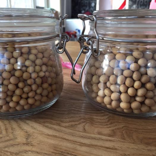 黑河嫩江县 出售九三大豆净粮 6.0直径,蛋白43以上,豆浆豆豆腐豆
