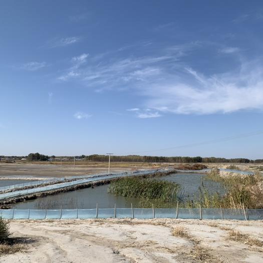 黑龙江省大庆市肇源县水田 万亩河蟹养殖基地对外承包