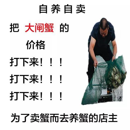 江苏省泰州市兴化市 鲜活兴化大闸蟹2.0到2.5母蟹