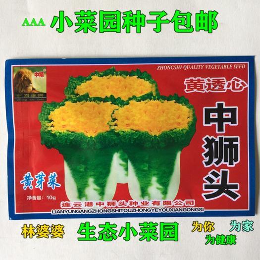 江苏省宿迁市沭阳县普通白菜种子 黄透心中狮头一号包邮