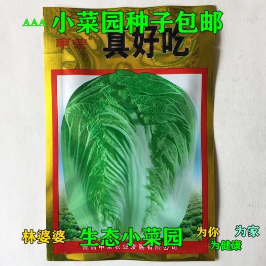 江苏省宿迁市沭阳县 真好吃高产结球大白菜种子包邮