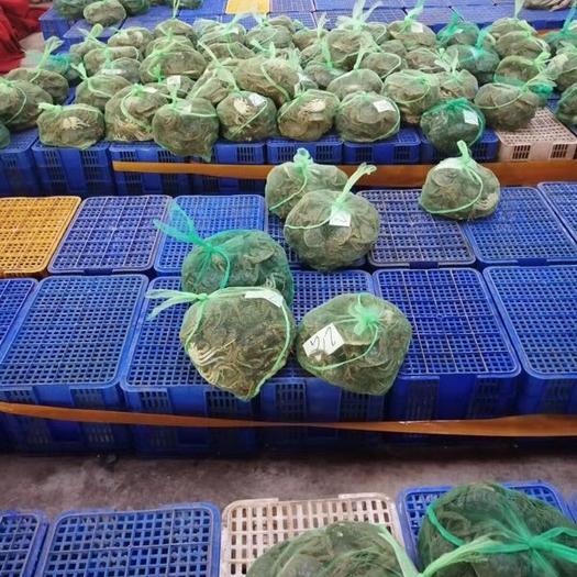 湖北省咸宁市嘉鱼县洪湖大闸蟹 湖北螃蟹大量上市价格优惠欢迎订购。