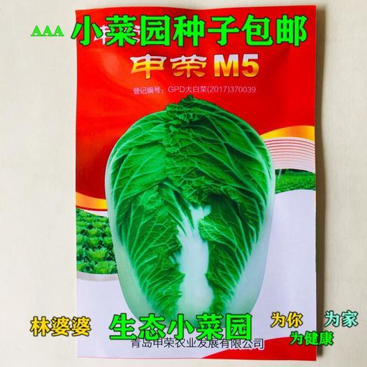 江苏省宿迁市沭阳县 申荣M5高产杂交大白菜种子包邮