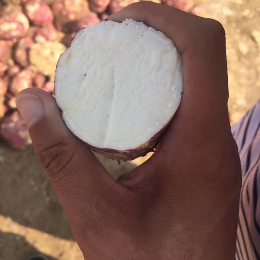 山东省临沂市兰山区 红薯