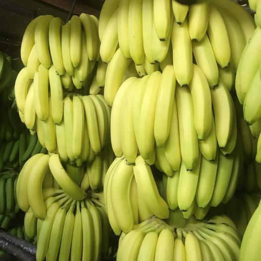 惠州 本店长期经营香蕉粉蕉……………………………………