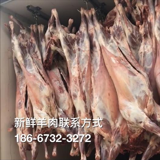 浙江省嘉兴市海宁市羊肉类 新鲜带皮山羊供应
