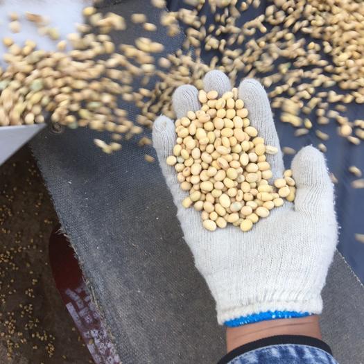 蚌埠五河县 比重精选大豆