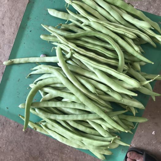 四川省凉山彝族自治州会理县紫花四季豆 物美价廉,货品真实