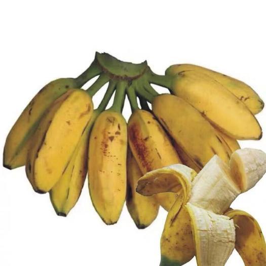 南宁 土芭蕉 广西芭蕉 包邮 一件代发非小米蕉香蕉