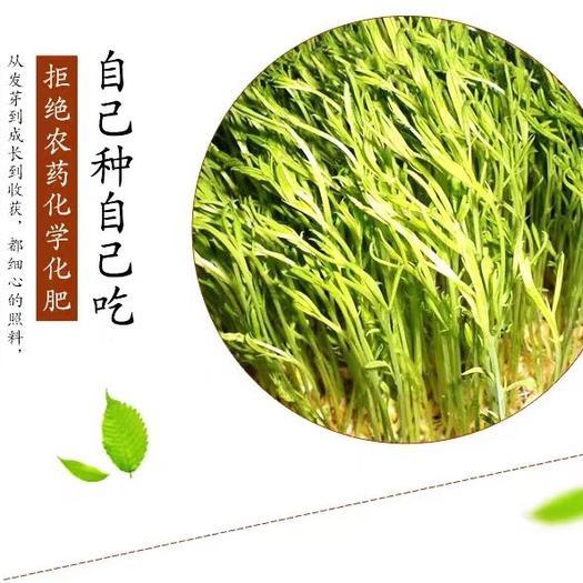 贵州省安顺市关岭布依族苗族自治县 豌豆芽。