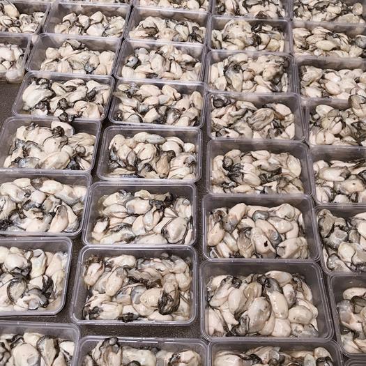 潮州饶平县 生蚝肉鲜活大生蚝现剥海蛎肉生吃品质 牡蛎肉
