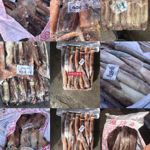 上海 原装进口全规格阿根廷鱿鱼