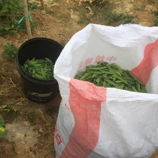 云南省红河哈尼族彝族自治州建水县甜豆 7-10cm