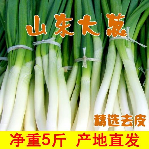 潍坊昌乐县 【特价包邮】山东潍坊大葱新鲜铁杆蔬菜长葱甜葱白批发包邮