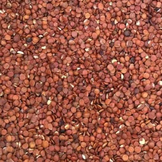 玉林 枣核、酸枣仁、炒枣仁  一斤起发货