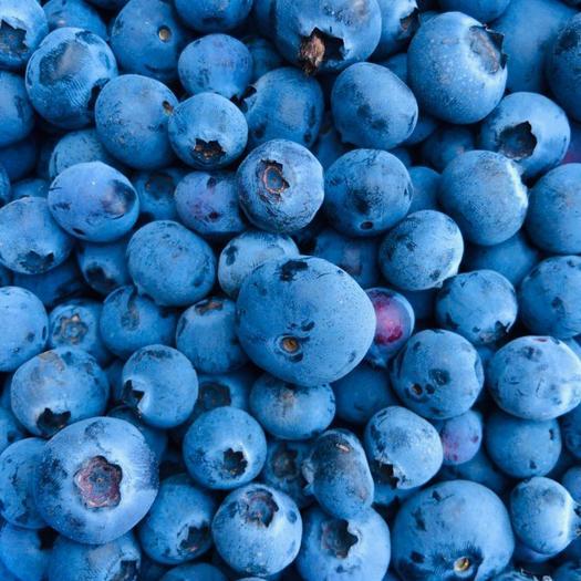昆明西山區兔眼藍莓 云南 中果 密斯提/珠寶/綠寶石 純甜純脆 8盒順豐包郵