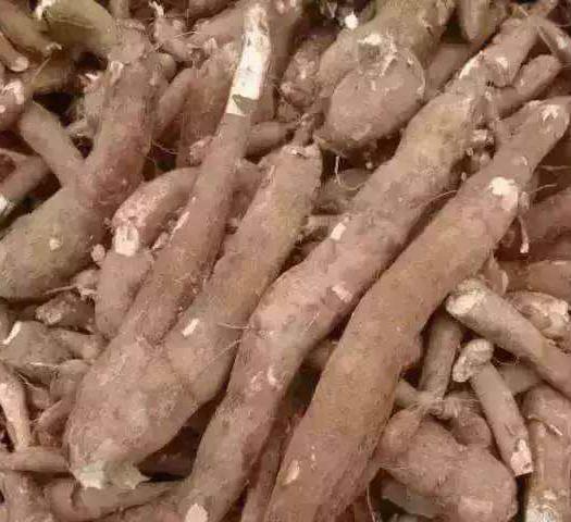 湛江雷州市 鮮木薯 歡迎廠家合作種植