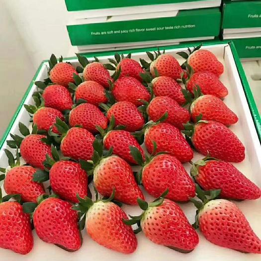 平度市 奶油草莓已經上市。正宗奶油草莓??诟械谝?。嘗鮮價來襲
