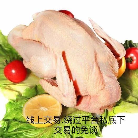 佛山南海区 三黄鸡.散养鸡.土鸡.