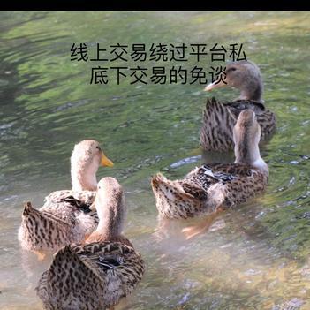 麻鸭.土鸭.农家鸭