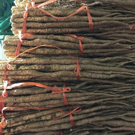 河南省焦作市沁阳市 正宗怀山药,垆土地铁棍山药,不是自己家种的不要钱。