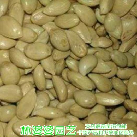 宿迁沭阳县枳壳种子 枳壳枸橘香橼香橙蜜柚种子包邮