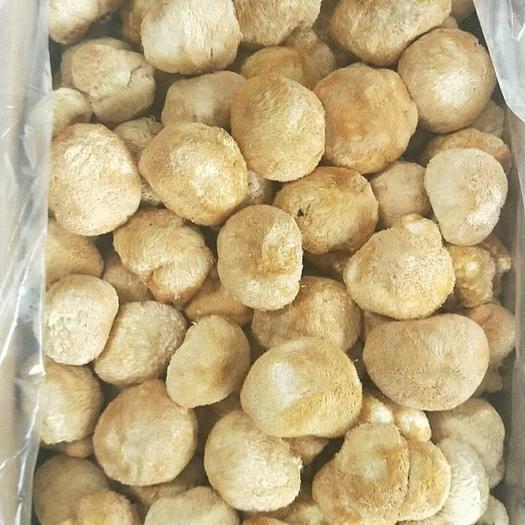 福建省宁德市古田县 古田干货猴头菇  农家特产精选猴头菇500g