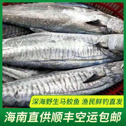 三亞天涯區 【順豐包郵】海南馬鮫魚海鮮冰鮮深海魚鲅魚海鮮批發包郵