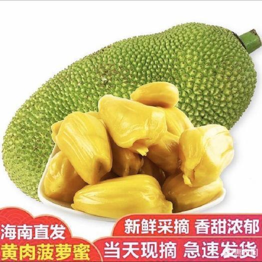 三亞吉陽區海南菠蘿蜜 特大果園供貨、清脆爆甜、包郵送到家、長期供貨水果零售