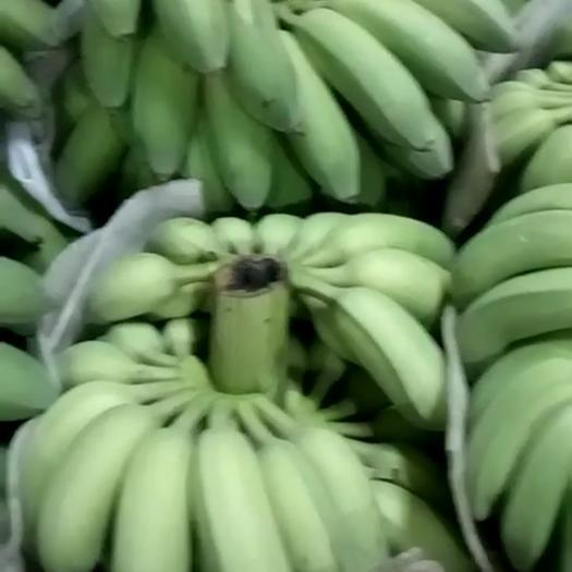 厦门 米蕉 粉蕉 八成熟