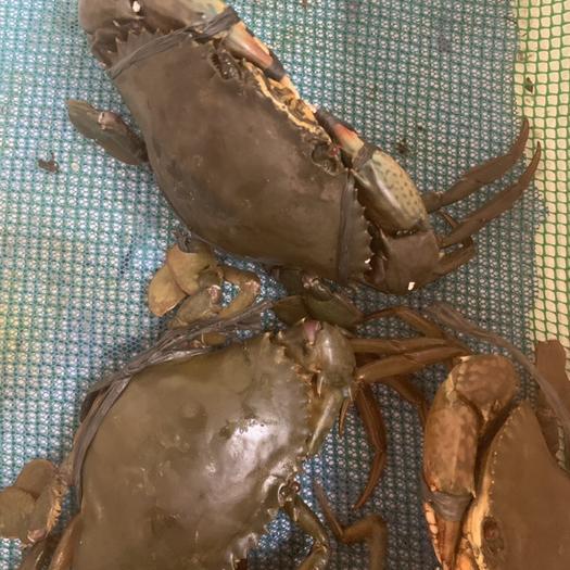 上海红膏蟹 青蟹+膏蟹+三门青蟹+斯里兰卡青蟹,样样都有。