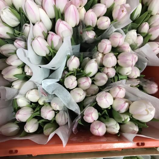 昆明 郁金香鲜花鲜切国产进口各种品种