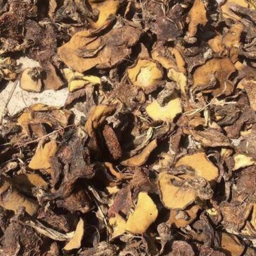 内蒙古自治区赤峰市喀喇沁旗松蘑 5吨松磨出售批发
