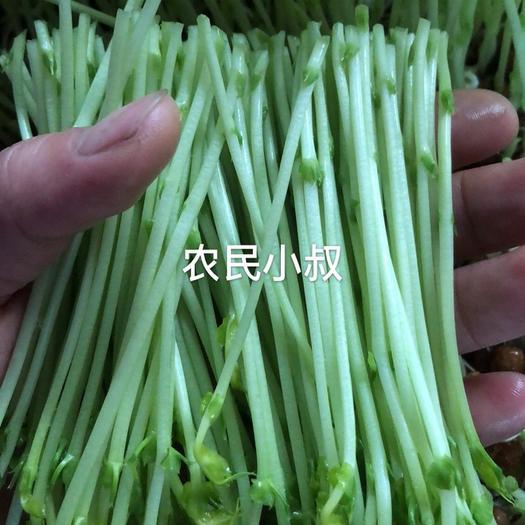 钦州 豌豆苗基地直供