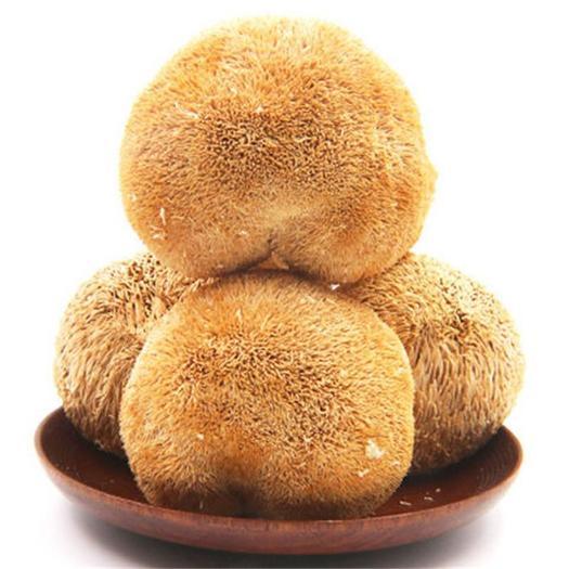 福建省宁德市古田县 猴头菇古田食用菌干货特产猴头菇24小时内发货包邮