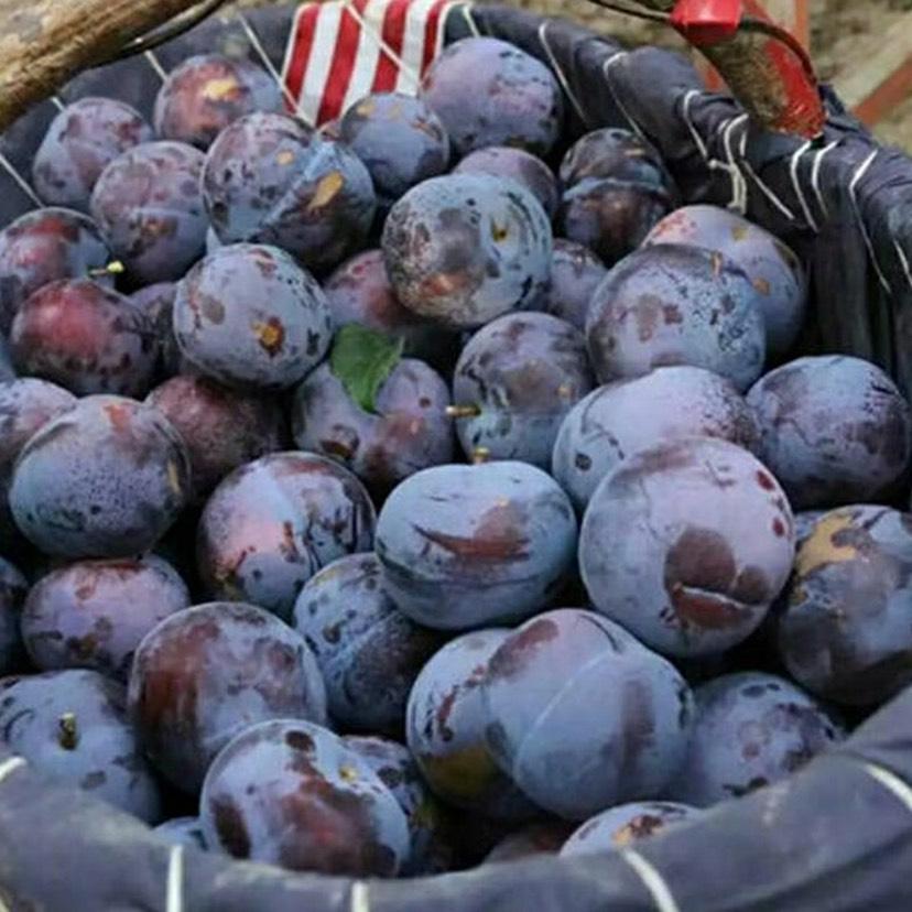 【特價包郵】新鮮現摘陜西黑玫瑰冰糖李李子水果應季水果批發